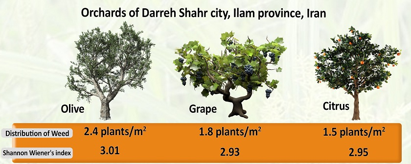Study flora and distribution of weed (Case Study: fruit orchards of Darreh Shahr city, Ilam Province of Iran)